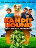 The Bandit Hound - 2016