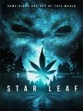 Star Leaf - 2015