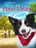 Angel Dog (Un Perro Divino) - 2011