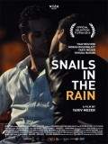 Snails In The Rain - 2013