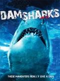 Dam Sharks - 2016