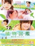 Evergreen Love - 2016