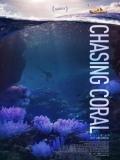Chasing Coral (En Busca Del Coral) - 2017