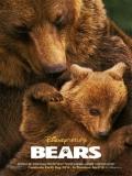 Bears - 2014