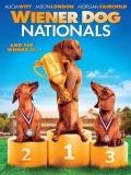 Wiener Dog Nationals - 2013