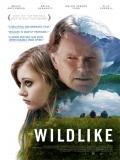 Wildlike - 2013