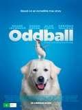 Oddball - 2015