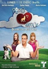 Perro Amor 10